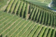 Strade del vino nel Langhe Fotografia Stock