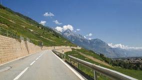 Strade della Svizzera, vigne Fotografia Stock