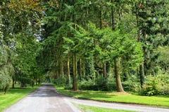Strade ed alberi del parc della foresta Fotografia Stock