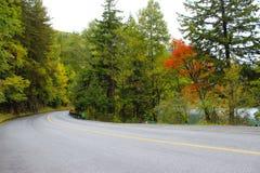 Strade nelle montagne con l'albero rosso Immagine Stock Libera da Diritti