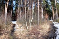 Strade trasversali nella foresta Fotografia Stock Libera da Diritti