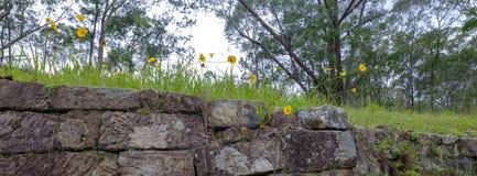 Straff?ngeslingan eller den stora nordliga v?gen n?ra Bucketty, i Hunter Valley, NSW, Austrialia arkivbilder