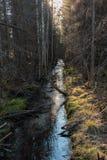Straght-Abzugsgraben im Sumpfgebietwald in Finnland Stockfoto