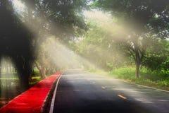 Strahlen beleuchten durch zwischen den Bäumen im Park und Straße als dem Hintergrund Stockfotos
