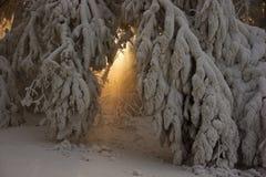 Strahlen der Leuchte stellt durch zwischen den Zweigen dar, die mit Sn umfaßt werden lizenzfreie stockfotografie