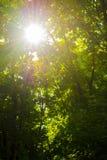 Strahlen der Sonne durch die Blätter Lizenzfreies Stockbild