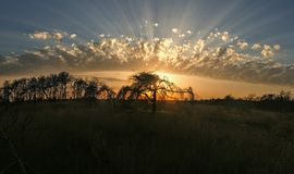 Strahlen der Sonne glänzen durch schön geformte Wolken hinter Baumschattenbildern Lizenzfreie Stockfotografie