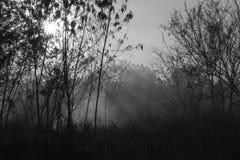 Strahlen der Sonne und des Rauches von einem Feuer Stockbilder