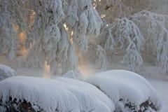 Schnee umfaßte Baumaste lizenzfreie stockfotos