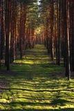 Strahlen des Lichtes im Herbstwald Lizenzfreie Stockfotos