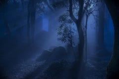 Strahlen des Nachtlichtes im Wald Stockfotografie