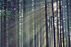 Strahlen des Sonnenaufgangs durch die Bäume stockbild