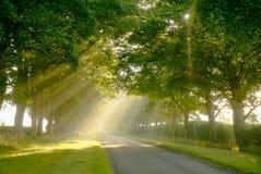 Strahlen des Sonnenscheins stockbilder