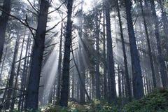 Strahlen im Nebel Lizenzfreie Stockfotos