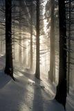 Strahlen im Winterwald lizenzfreie stockfotos