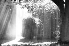 Strahlen, Rauch und Baum lizenzfreies stockfoto