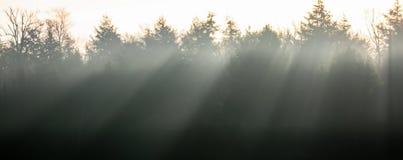 Strahlen von Sun in den Kiefern Lizenzfreies Stockbild