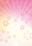 Strahlnblumen Stockfoto