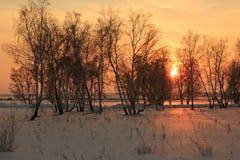 Strahlt die untergehende Sonne aus, die durch Niederlassungen von Bäumen im Winter strömt Stockfoto
