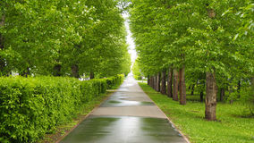 Straight alley in a summer city park. Straight alley in the summer city park Royalty Free Stock Photo