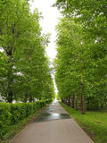 Straight alley in a summer park Stock Photos