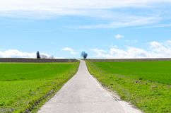 Straight asphalt road in green field royalty free stock images