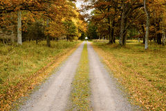 Straight autumn road Royalty Free Stock Photo