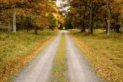 Straight autumn road Royalty Free Stock Photo