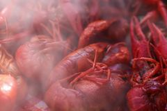 Straight from the boiling water very red cooked whole crawfish with eyes and feelers in a pile with part of the image blurred by. Smoke - room for copy stock photos