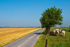 Straight Country Road. Straight Road Through the Countryside in Flanders, Belgium Royalty Free Stock Images
