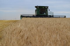 Wheat harvest  Stock Photos