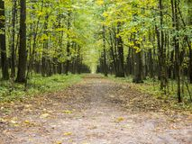Straight dirt alley in autumn park Stock Image