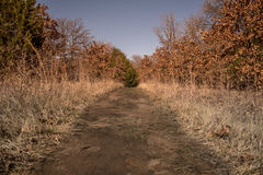 Straight Dirt Path Royalty Free Stock Photo