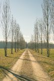 Straight dirt road with row of trees Stock Photos