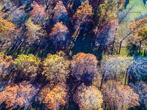 Straight Down Aerial Over Winter Trees brown and dropping their leaves rows and rows. Of Trees some yellow , some almost dead with no leaves , and some golden royalty free stock photography