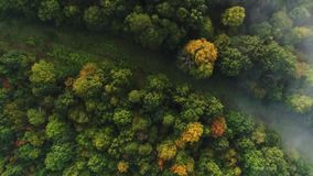 Straight Down View of Foggy Pennsylvania Treetops. 9174 A straight down aerial view of a foggy Western Pennsylvania forest on an early Autumn morning stock video footage