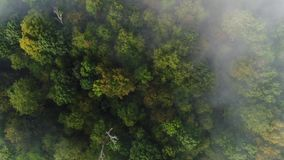 Straight Down View of Foggy Pennsylvania Treetops. 9176 A straight down aerial view of a foggy Western Pennsylvania forest on an early Autumn morning stock video