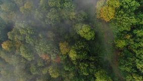 Straight Down View of Foggy Pennsylvania Treetops. 9171 A straight down aerial view of foggy Western Pennsylvania treetops on an early Autumn morning stock video