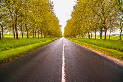 Straight empty wet road between trees. Loire valley. France. Royalty Free Stock Photos