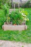 Straight farming, kitchen garden Stock Photography