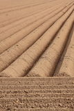 Straight farmland lines Royalty Free Stock Images