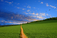Straight farmland path. Path running straight to the horizon through young green wheat field. The rich color of the pathway picks out the colours in the Royalty Free Stock Photography