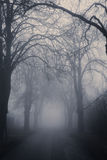Straight foggy passage surrounded Royalty Free Stock Images