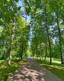 Straight footpat between green trees Stock Photography
