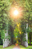 Straight forest pathway with beautiful sunrays Stock Photos