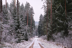 Straight road through snowy forest Stock Photo