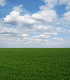 Straight green field under blue sky Stock Photography