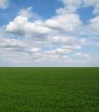 Straight green field under blue sky
