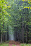 Straight ground road leading across forest Stock Images