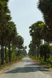 Straight Long Road in a Tropical Landscape Royalty Free Stock Photos